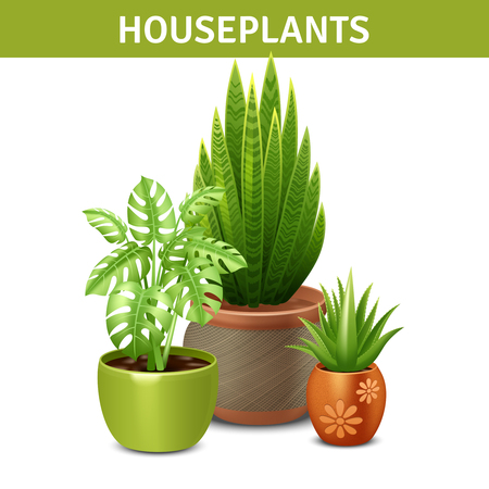 different types: Realistic houseplants composition with green plants pots and ground vector illustration