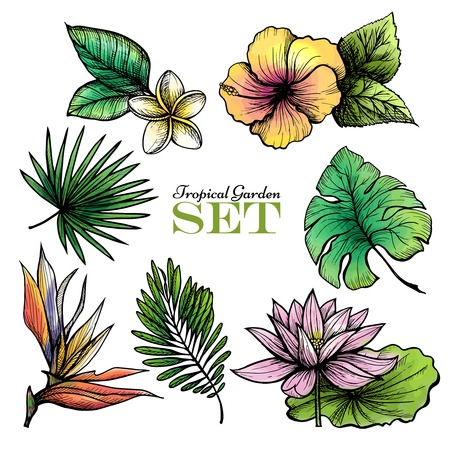 tropical garden: Tropical garden set of colored leaves and flowers isolated vector illustration Illustration