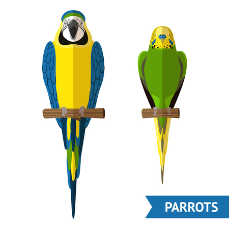 parrot tail: Two front view sitting parrots colorful flat decorative icons set isolated vector illustration