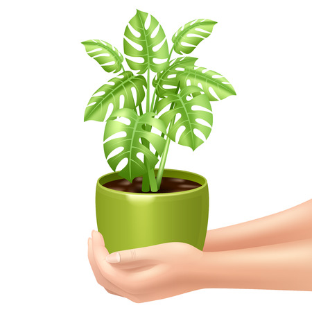 plant pot: Woman holding a houseplant realistic vector illustration with hands and green pot Illustration