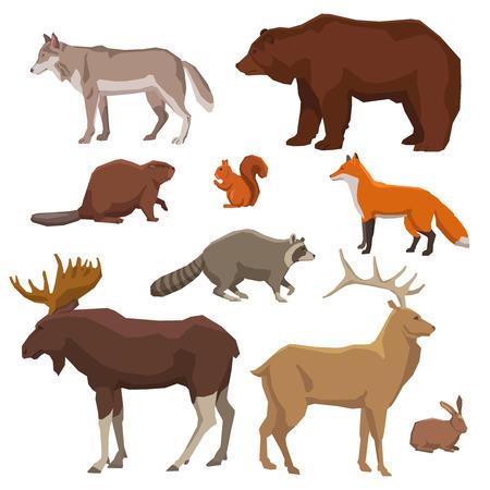 야생 숲 동물 늑대 여우 엘크 토끼 곰과 색상 아이콘 세트 격리 된 벡터 일러스트 레이 션 그린 비버 일러스트