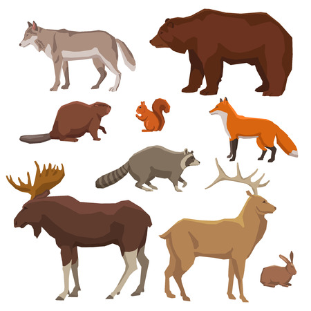 Wild forest animals bear wolf fox elk rabbit and beaver painted color icon set isolated vector illustration Çizim