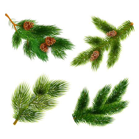 arbol de pino: Ramas de los árboles de pino con conos para Chrismas decoraciones 4 iconos set bandera composición realista ilustración vectorial abstracto