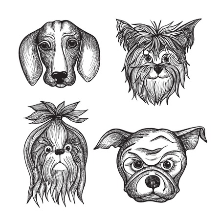bolognese: Hand drawn dog faces set with dachshund bulldog and terrier isolated vector illustration Illustration