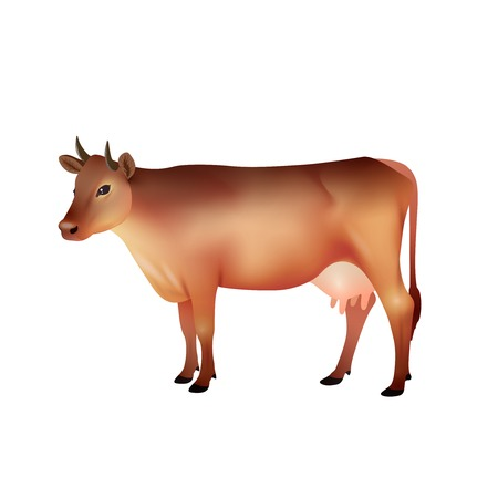 brown background: Realistic brown farm cow isolated on white background vector illustration