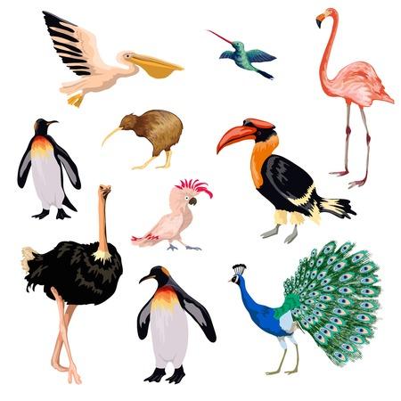 kiwi: Exotic birds decorative icons set with pelican parrot flamingo penguin isolated vector illustration
