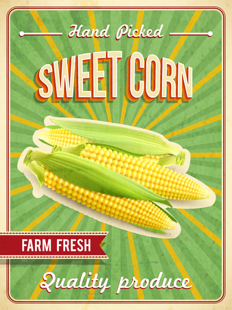 the fresh: Sweet farm fresh corn poster with corn-cobs realistic vector illustration Illustration