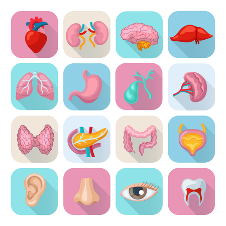 Healthy human body organs flat long shadow icons set isolated vector illustration