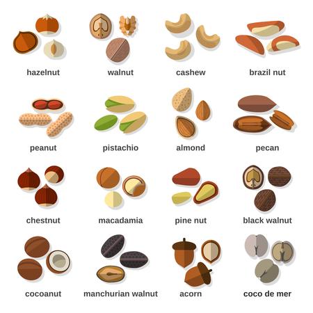 pinoli: Dadi icone piane impostate con illustrazione vettoriale nocciola noce anacardio arachidi isolato Vettoriali