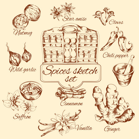isolated: Spices sketch set with nutmeg vanilla cinnamon ginger isolated vector illustration
