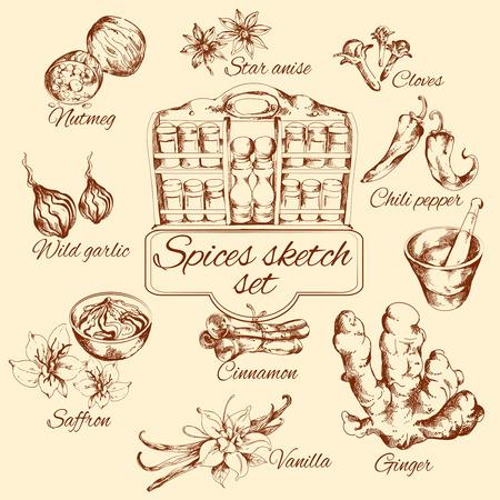 nutmeg: Spices sketch set with nutmeg vanilla cinnamon ginger isolated vector illustration