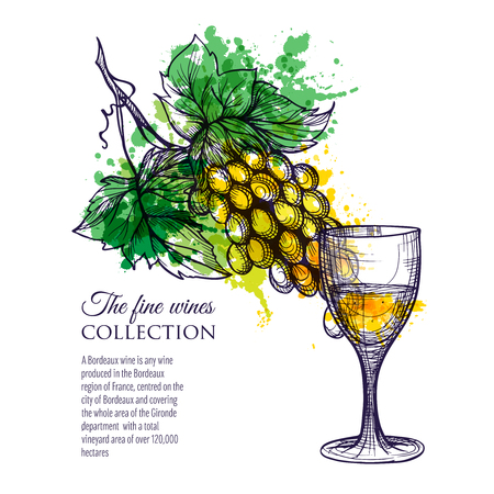 wood creeper: Glass of white wine with branch grapes hand drawn vector illustration Illustration