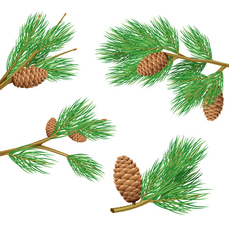 cone: Green pine branches with cones realistic set for decoration isolated vector illustration