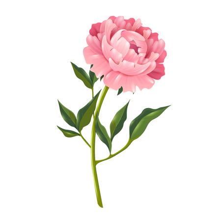 Single pioenroos bloem met bladeren realistische geïsoleerde vector illustratie voor decoratie