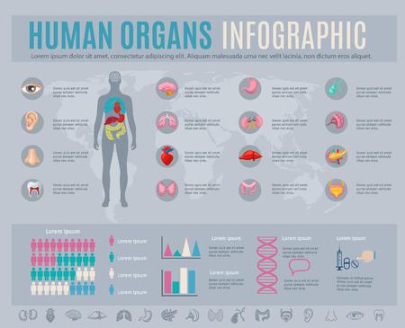 人間の臓器のインフォ グラフィック設定内部の体の部分を記号と図のベクトル イラスト