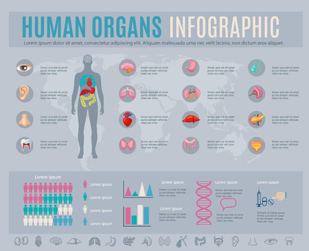 Human organs infographic set with internal body parts symbols and charts vector illustration