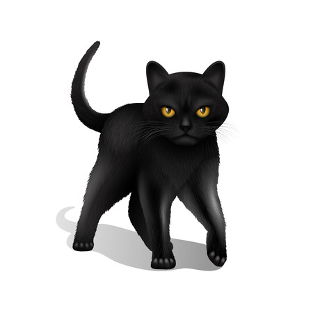 Young black realistic domestic cat isolated on white background vector illustration