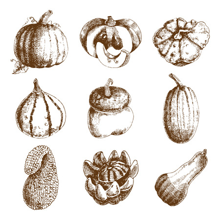 squash: Decorative unusual pumpkins varieties and winter squash icons collection hand drawn doodle style abstract isolated vector illustration