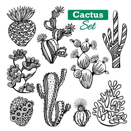 cacti: Decorative different types of cactus icons set with thorns black white sketch isolated vector illustration