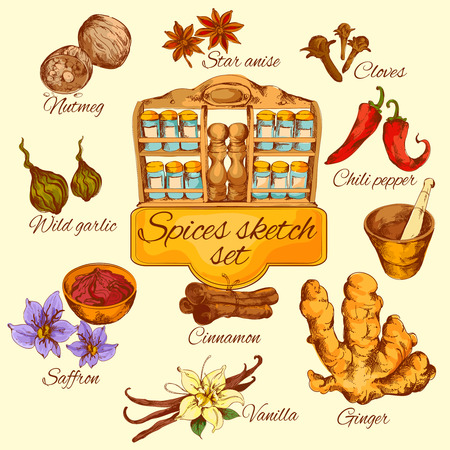 saffron: Spices sketch colored set with chili pepper saffron garlic anise isolated vector illustration Illustration