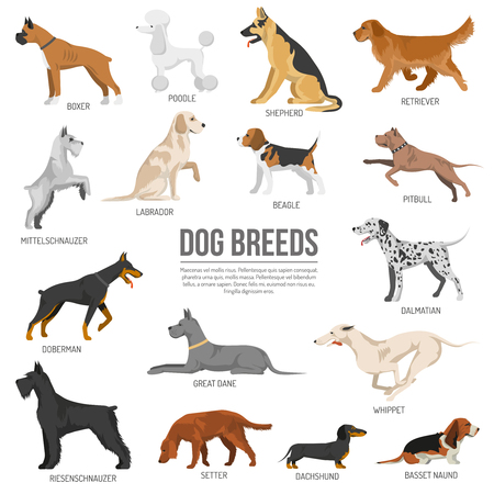 Dogs breed set with bull terrier boxer poodle isolated vector illustration Иллюстрация