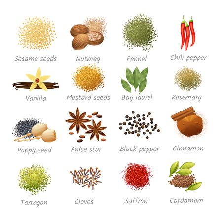 Zestaw ikon z tytułami pikantnych składników żywności i pachnących przypraw realistyczne izolowane ilustracji wektorowych