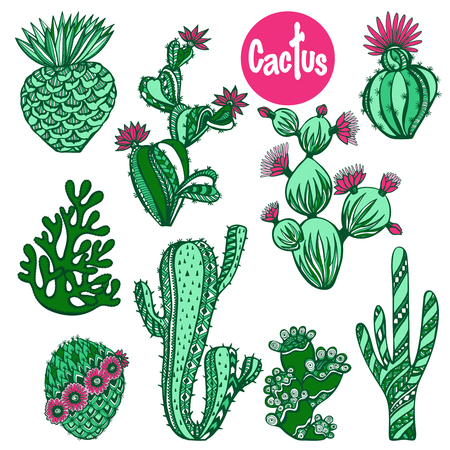 flower concept: Color hand drawn cactus succulent house plants decorative icons set isolated vector illustration Illustration
