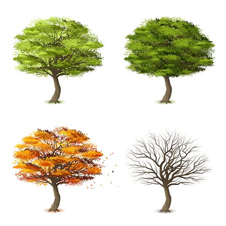 Trees in four seasons realistic decorative icons set isolated vector illustration Vettoriali