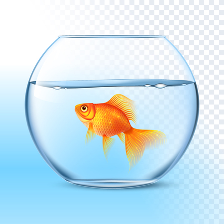 decorative fish: Single goldfish swimming in transparent round glass bowl aquarium realistic image print vector illustration