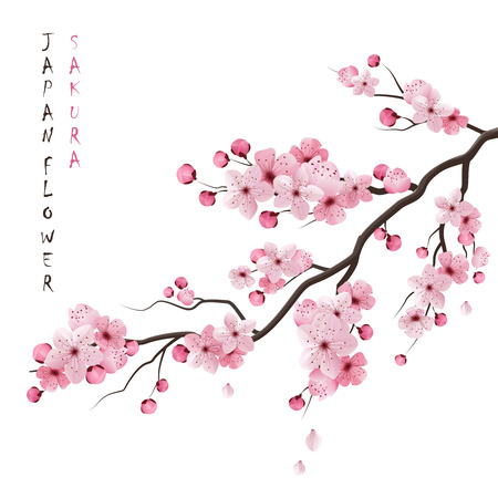 japanese: Realistic sakura japan cherry branch with blooming flowers vector illustration