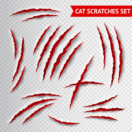 Cat claws scratches on transparent background realistic vector illustration Stock fotó - 51139099