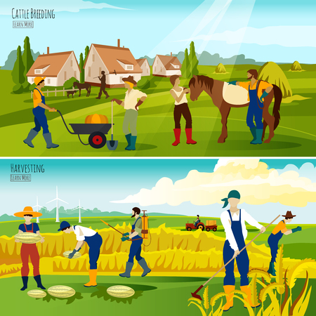 cattle breeding: Cattle breeding for beef market and crop harvesting 2 flat horizontal banners composition abstract isolated vector illustration Illustration