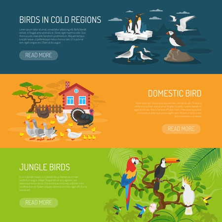 cock duck: Flat horizontal banners set of birds in cold regions domestic birds and jungle birds vector illustration Illustration