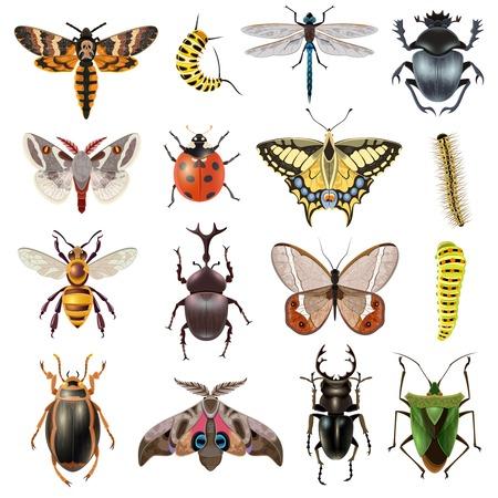 insecto: Insectos iconos realistas fijados con mariposas y escarabajos aislado ilustración vectorial