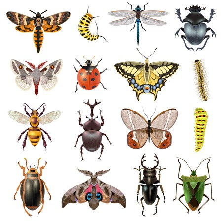 Insects realistic icons set with butterfly and beetles isolated vector illustration