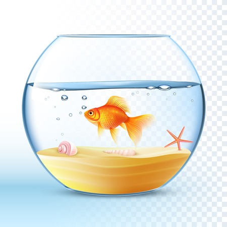 Goldfish swimming in round fishbowl with shell and starfish on the sand bottom poster abstract vector illustration