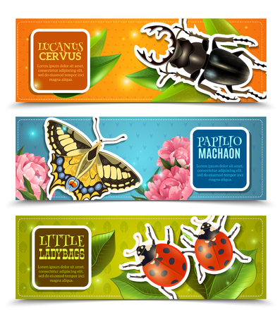 machaon: Insects horizontal banners set with ladybugs and machaon realistic isolated vector illustration