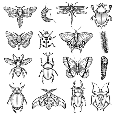 Insetti nero bianco icone delle linee impostate con la libellula e bruco piatto isolato illustrazione vettoriale