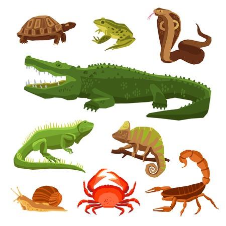 cocodrilo: Reptiles y anfibios decorativos Conjunto de iconos de la cobra cocodrilo tortuga caracol escorpi�n de cangrejo en la ilustraci�n vectorial estilo de dibujos animados Vectores