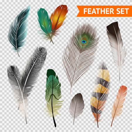 Bird feathers realistic set on transparent background isolated vector illustration