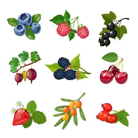 jugo de frutas: Bayas de árboles y arbustos establecidos con las hojas verdes ilustración vectorial aislado