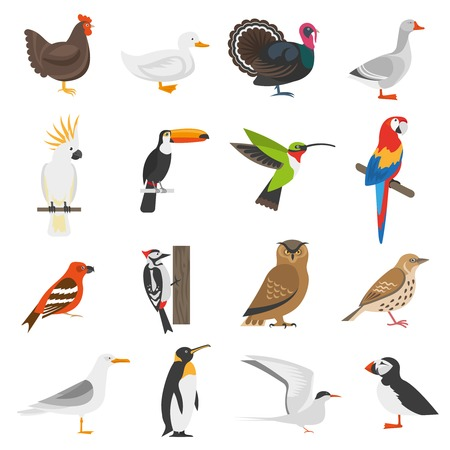 cock duck: Bird flat color icons set of penguin woodpecker parrot owl turkey goose chicken duck isolated vector illustration