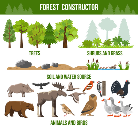 shrubs: Forest constructor poster with trees shrubs and grass animals and birds source packs flat isolated vector illustration