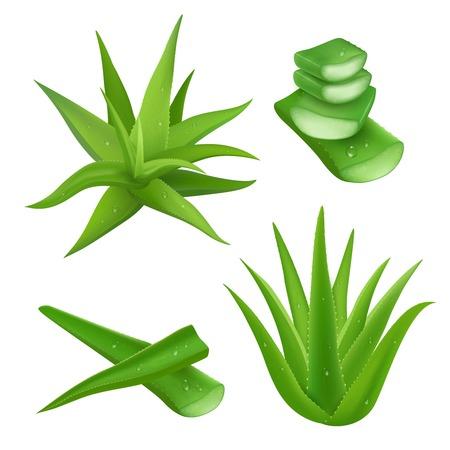 aloe vera: Aloe vera plant realistic set with cut pieces isolated vector illustration
