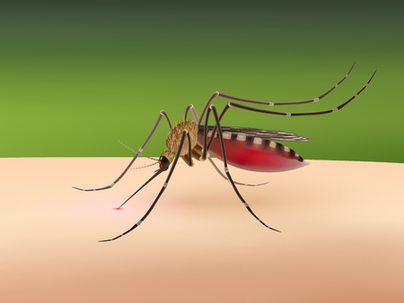disease carrier: Realistic 3d mosquito sucking blood on human body vector illustration Illustration