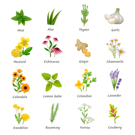 Healing herbs and medicinal plants flat icons collection with ginger chamomile and garlic abstract isolated vector illustration
