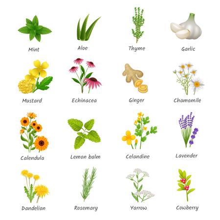 Guérison herbes et plantes médicinales collection d'icônes plat avec le gingembre et l'ail camomille abstraite isolé illustration vectorielle Banque d'images - 54758070