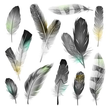 plumas de pavo real: Pájaro blanco y negro plumas realistas establece la ilustración vectorial aislados Vectores
