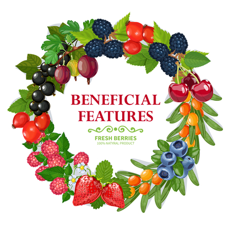 beneficial: Fresh wild and garden harvested berries wreath natural colorful decorative frame background print abstract vector illustration Illustration