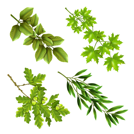 botanical garden: Realistic collection of green branches of deciduous trees with oak maple olive leaves isolated vector illustration
